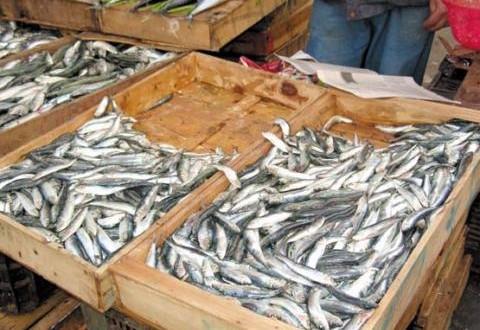 Consommation / Marché du poisson: Le prix de la sardine baisse, l'association de protection du consommateur crie victoire